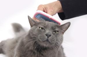 Разресване котки