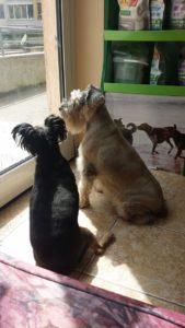 Подстригване на кучета