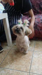 Подстригване на кучета Двете плитки