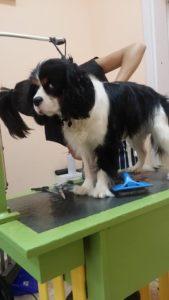 Подстригване на кучета Доста съм взискателен да знаете