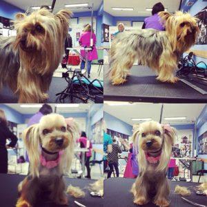 Груминг на кучета Азиатски стил